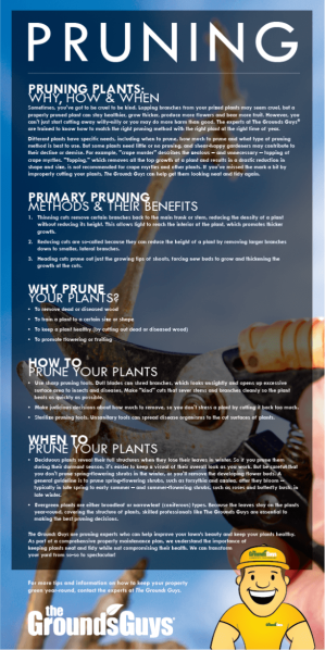 Pruning infographic